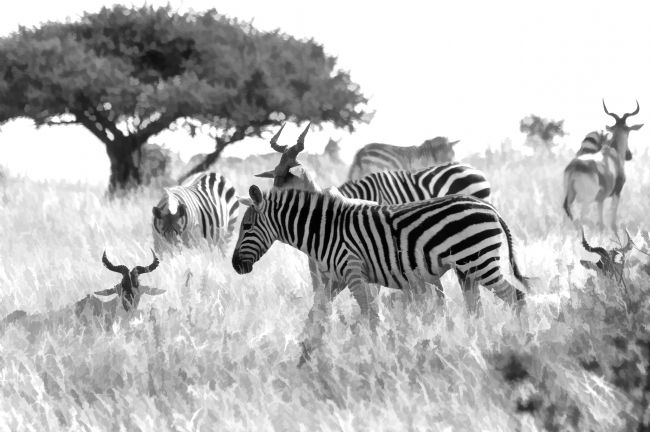 Mary Fletcher | Zebra and Antelope