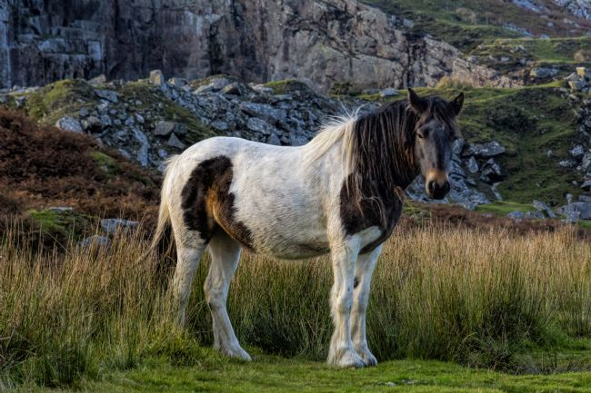 Mary Fletcher | Bodmin Pony