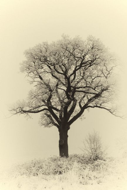 Mary Fletcher | Lone Tree