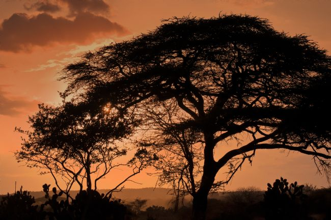 Mary Fletcher | African Sunset