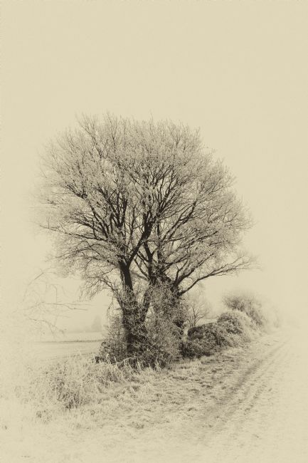 Mary Fletcher | Frosty Hedgerow