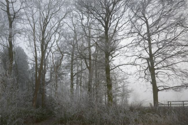 Mary Fletcher | Winter Woodland