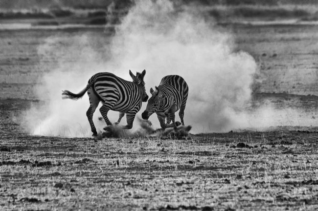 Mary Fletcher | Fighting Zebras