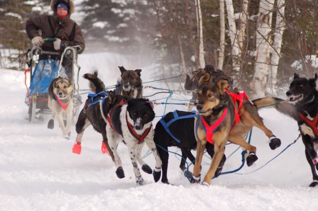 Roger Simmons | Sled Dog Chaos