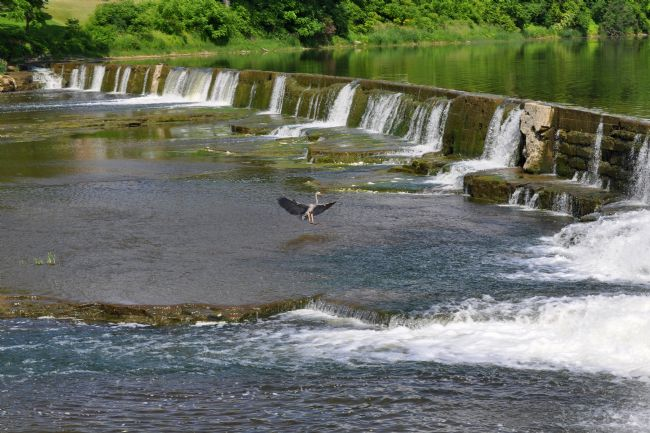 Roger Simmons | Great Blue Heron At St. Marys Dam