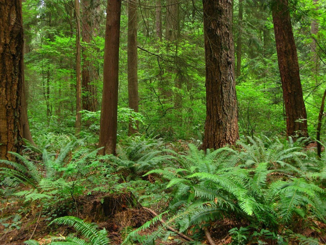 Chris Langley | Understory of the Temperate Rainforest, British Columbia, Canada