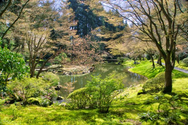 Chris Langley | Lake at Nitobe Memorial Japanese Garden, Vancouver