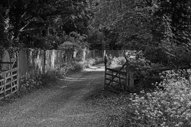 Chris Langley | A Country Walk near Swyncombe,Oxfordshire - monochrome