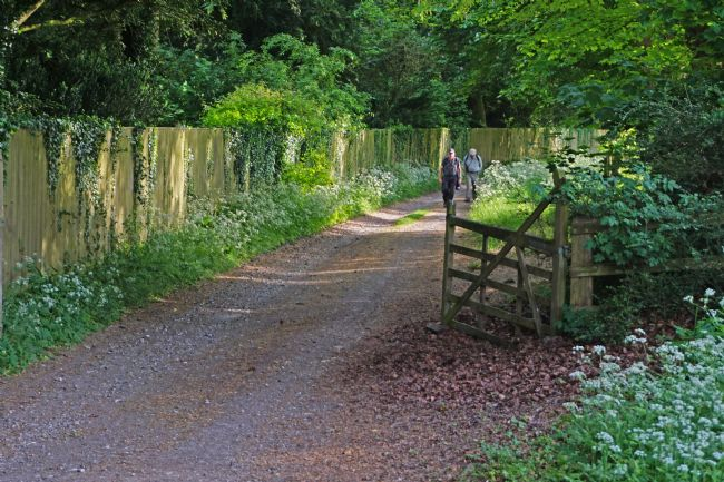 Chris Langley | A Country Walk near Swyncombe,Oxfordshire