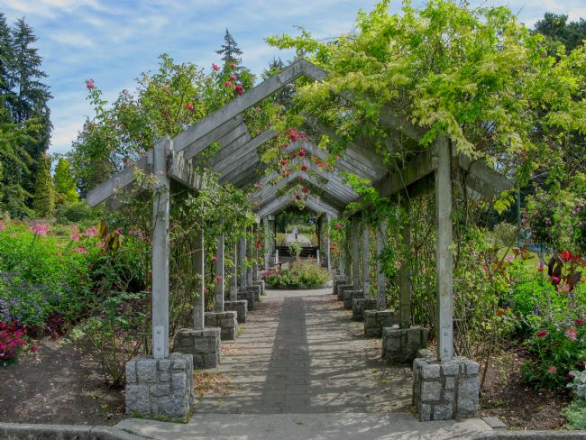 Chris Langley | The Rose Arbor - Stanley Park, Vancouver