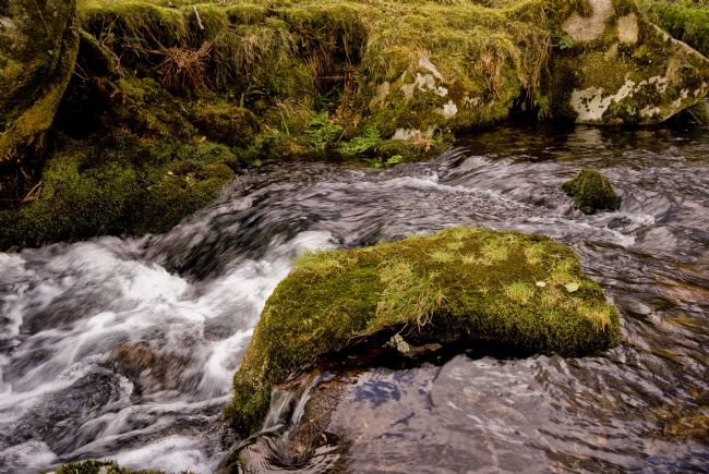 Jay Lethbridge | Meavy River, Dartmoor
