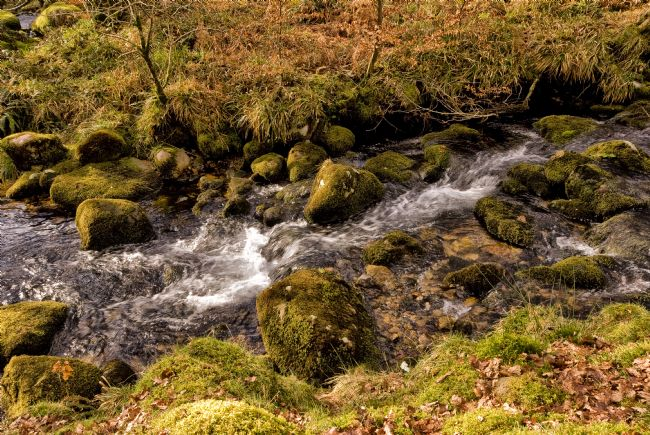 Jay Lethbridge | River Meavy, Dartmoor National Park