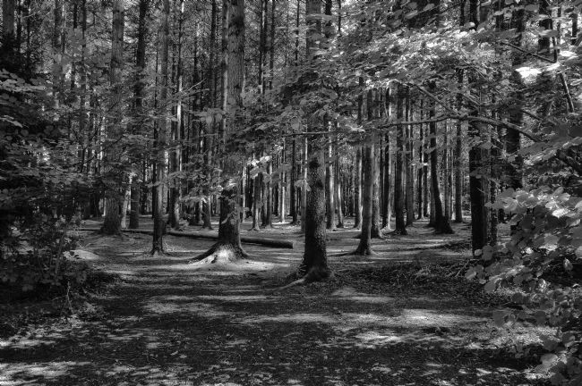 Jay Lethbridge | Stover Country Park in Black and White