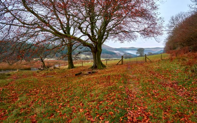Gordon Maclaren | Autumn on the banks of Talybont Reservoir