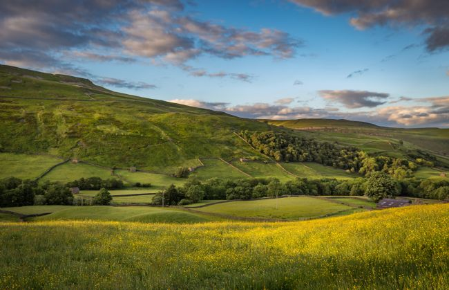 Kevin Cook | Swaledale Buttercups