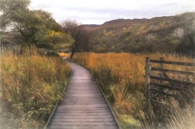 Linsey Williams | Autumn in Borrowdale, Cumbria