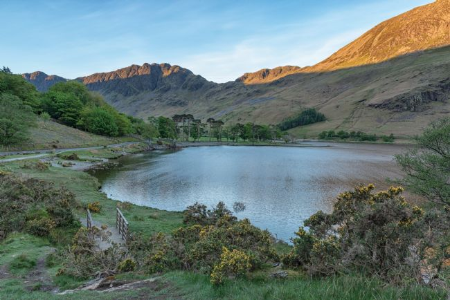 John Hare | Buttermere Pines