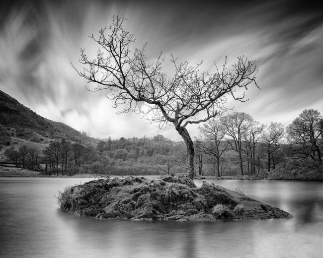 John Hare | The Lone Tree - Monochrome