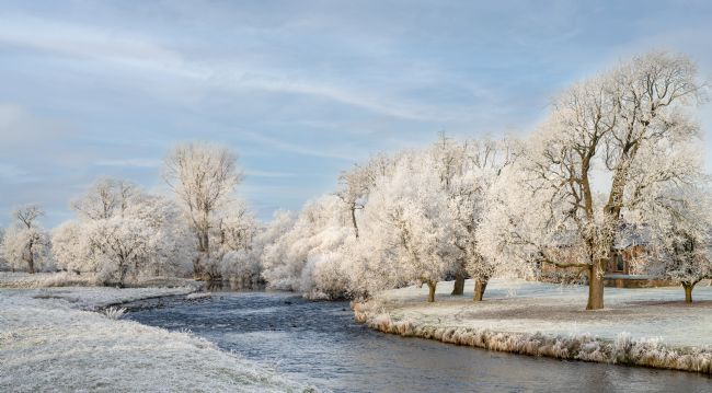Janet Burdon | Frosted Trees on the River Eden