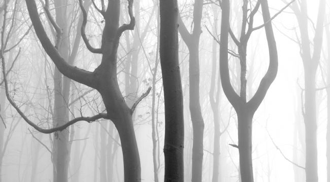 Janet Burdon | Misty Beech Wood