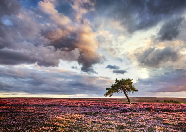 Janet Burdon | Lone Tree at Sunset