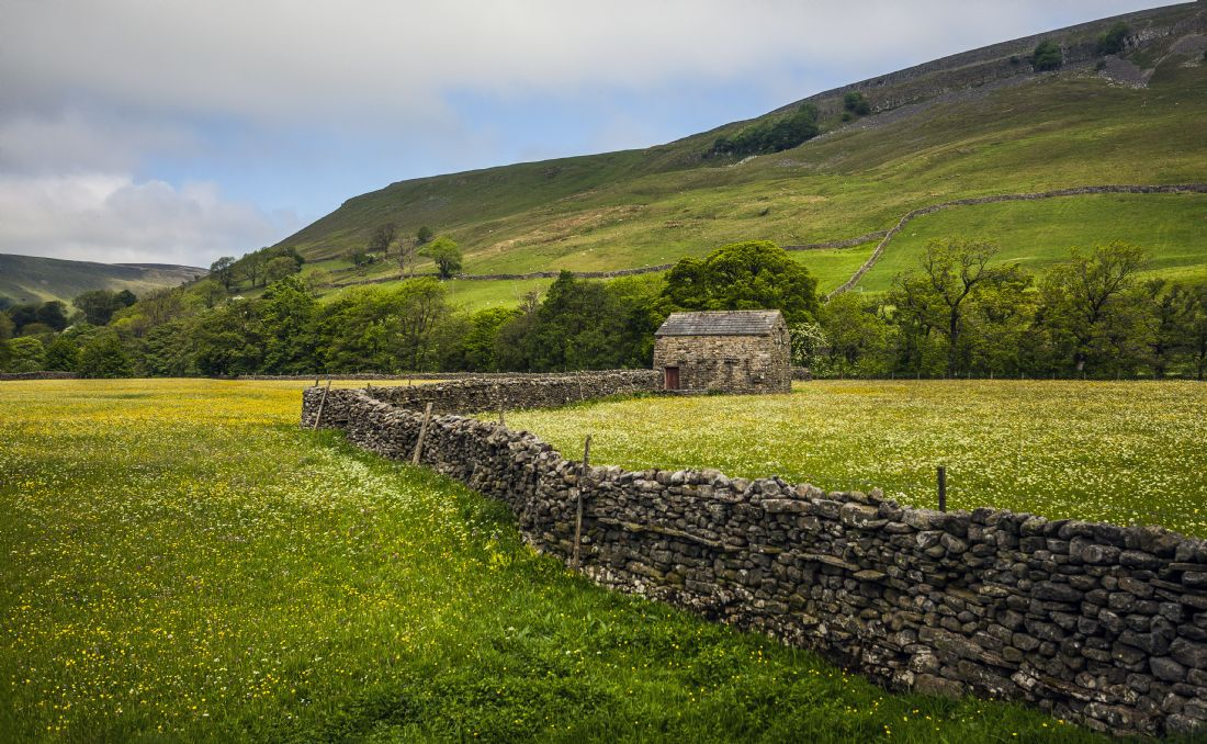 Sandra Cockayne | Dry Stone Wall, And Buttercups
