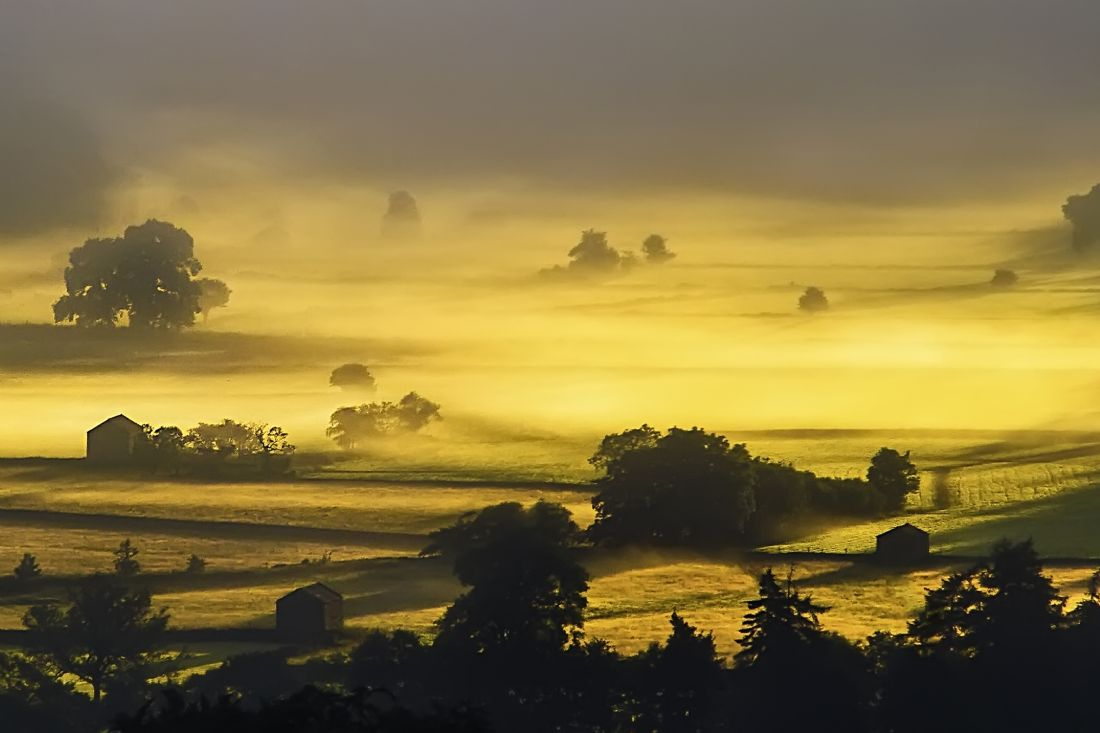 Sandra Cockayne | Golden Morning Mist