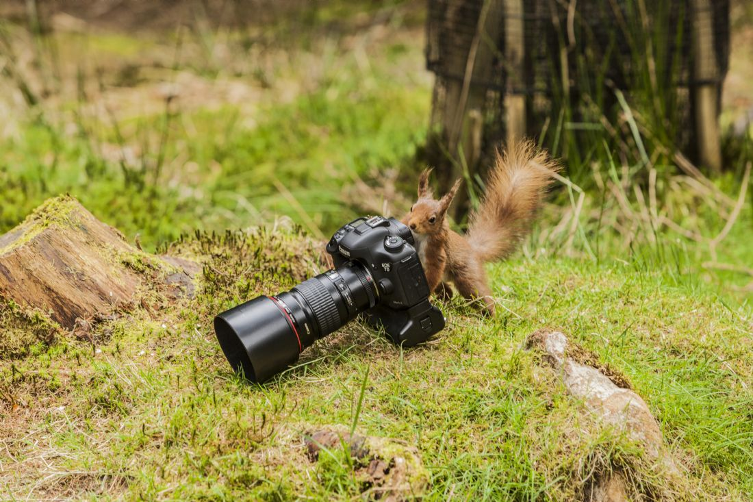 Sandra Cockayne | Red Squirrel XI