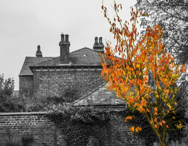 Sandra Cockayne LDPS. | Autumnal Rooftops (Digital Artwork)