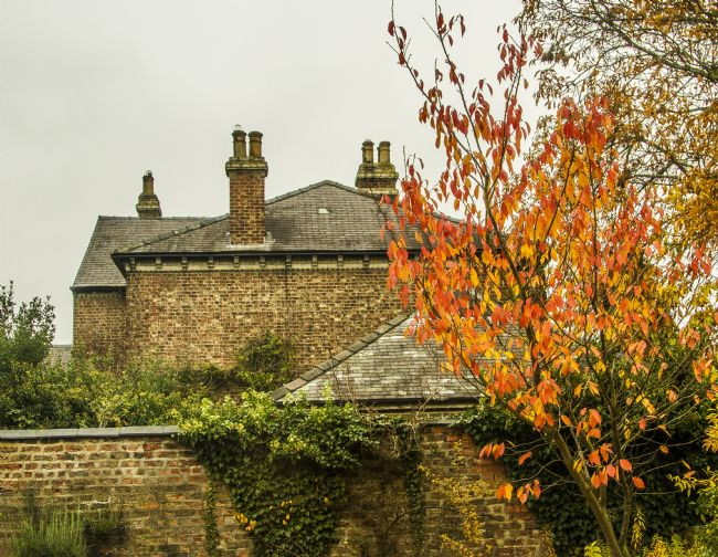 Sandra Cockayne LDPS. | Autumnal Roof Tops