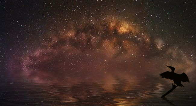 Sandra Cockayne ADPS. | Cormorant Over Milky Way (Digital Art)