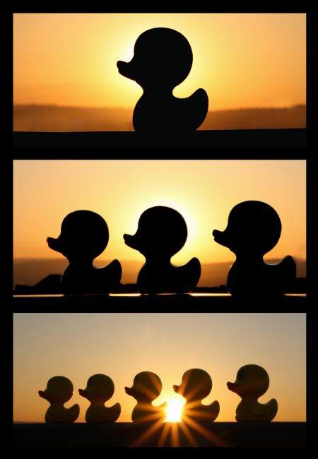 Sandra Cockayne | Duck Silhouette Tryptic