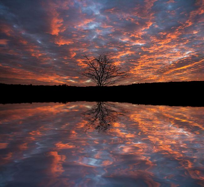 Sandra Cockayne ADPS. | Fire Tree Sunset Reflections