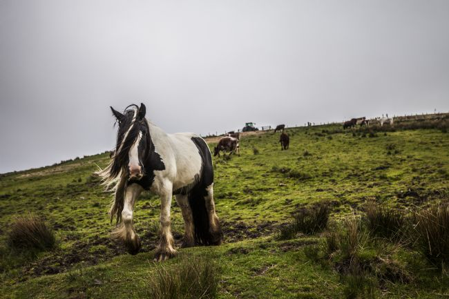 Sandra Cockayne LDPS. | Windswept Horse At Ravenseat