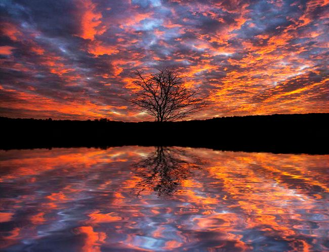 Sandra Cockayne ADPS. | Fire, Fire, Fire, Vibrant Fire Tree Sunset