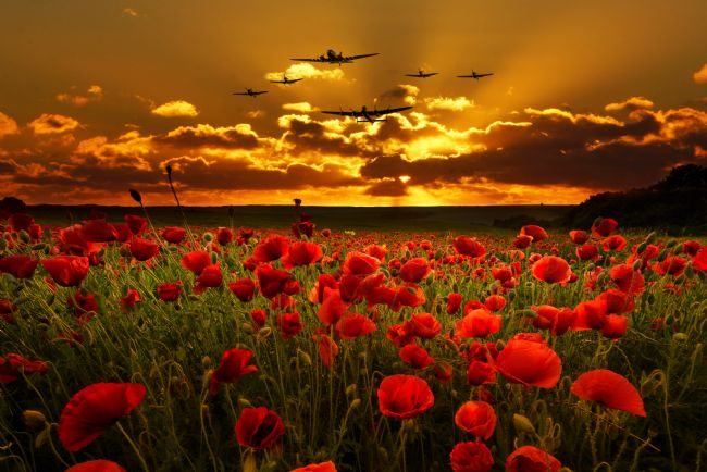 James Biggadike | Sunset Poppies - The BBMF