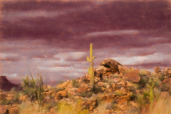 Christine Fitzgerald | In The Hot Sonoran Desert