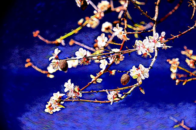 Elvia Worrall | Painted Almond Blossom