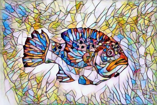 Elvia Worrall | Stained Glass Fish