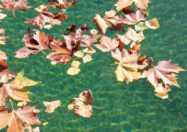 Elvia Worrall | Floating Autumn Leaves