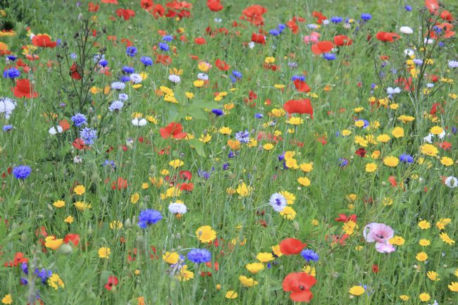Elvia Worrall | Wild Flower Field