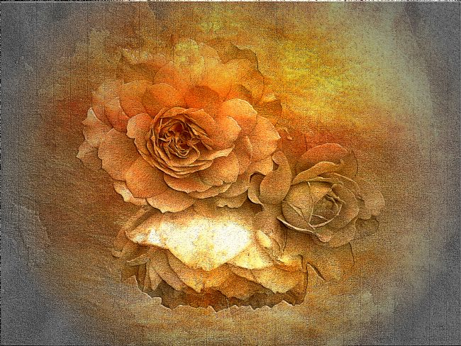 Lynn Bolt | Golden Roses