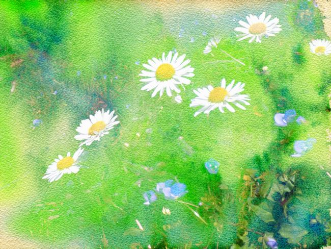 Lynn Bolt | Daises and Forget Me Nots