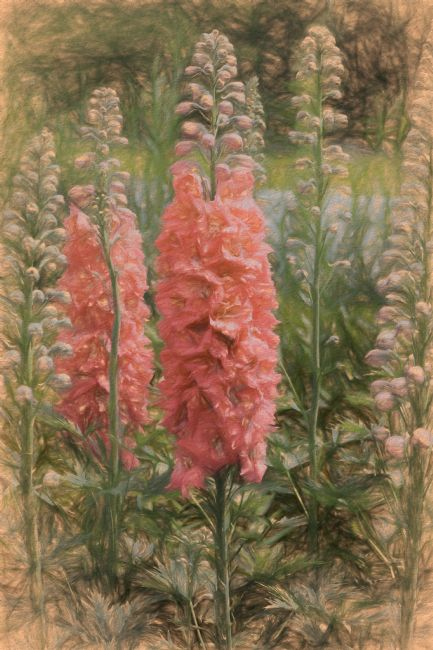 Lynn Bolt | Delphiniums