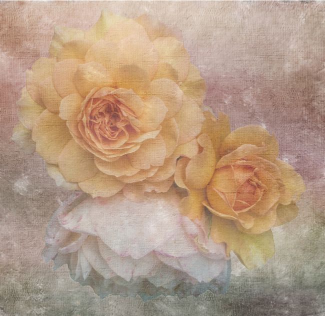 Lynn Bolt | Three Roses