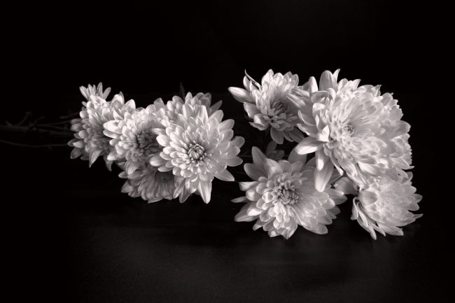 Lynn Bolt | Chrysanthemum Spray
