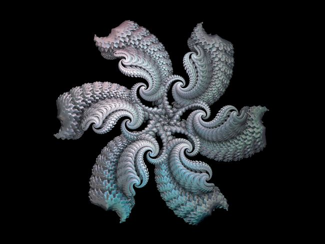 Lynn Bolt | Silver Starfish