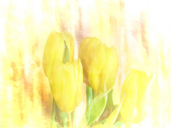 Lynn Bolt | Yellow Tulips
