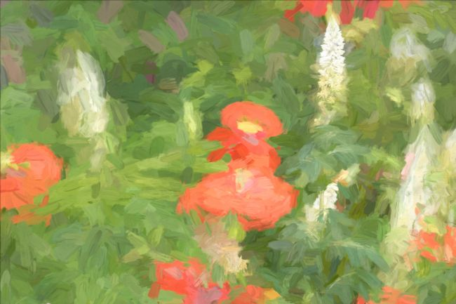 Lynn Bolt | Abstract Poppies