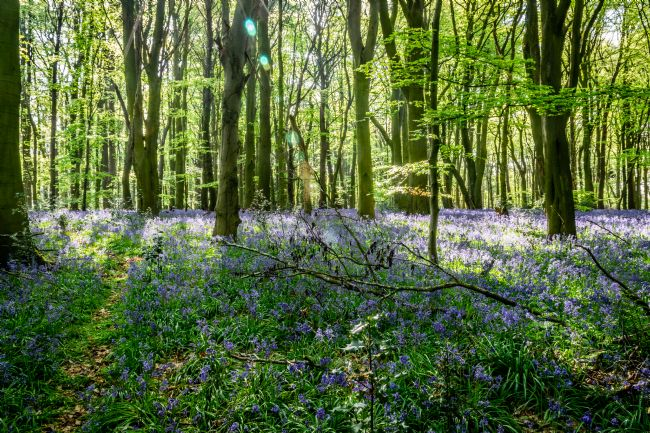 Warren Byrne | Bluebells